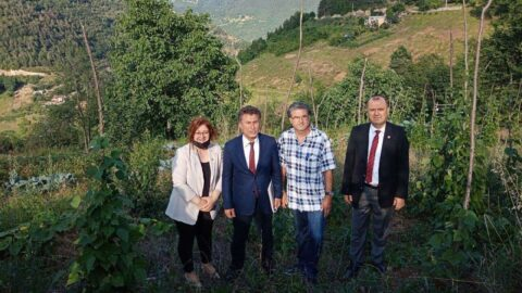'Drakula böceği' nedeniyle fındık bahçeleri sökülen çiftçiler dertli