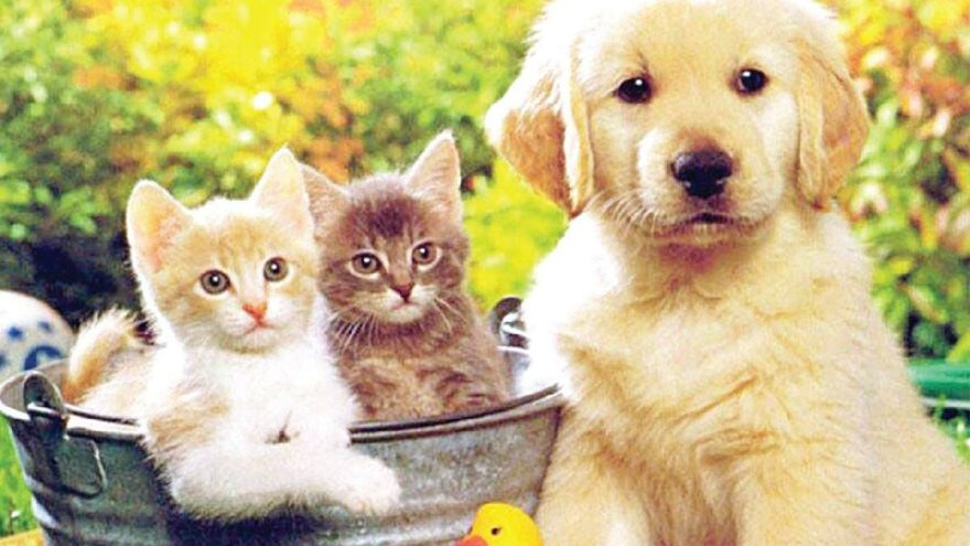 Hayvan hakları yasası için hayvanseverler 'caydırıcı değil' dedi