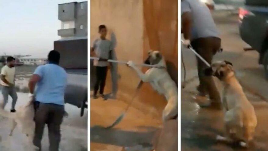 Vicdanları sızlatan görüntü sonrası İYİ Partili Sıdalı'dan yeni kanuna tepki