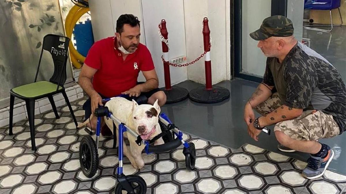 Ayakları kesilen köpek için hayvanseverler seferber oldu