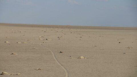 İnsanlar Tuz Gölü'nü kuruttu, 3 bin flamingo yavrusu öldü