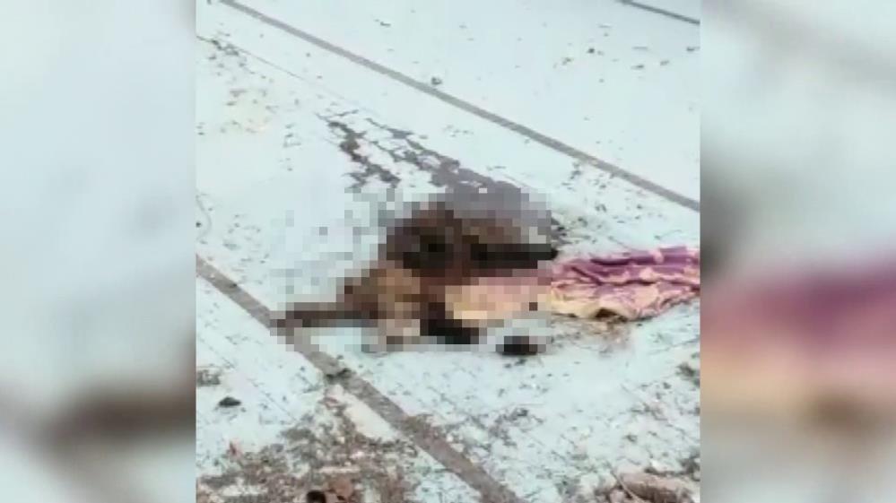 Adana'da bir köpek bıçaklanarak öldürülmüş halde bulundu