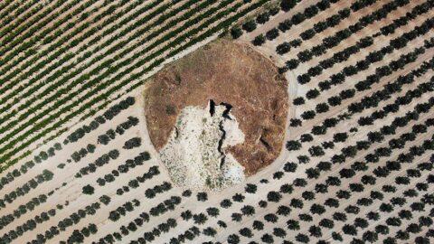 Defineciler 2 bin 600 yıllık timülüsleri tahrip etti