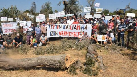 Seferihisar'da köylülerden JES için ağaç kesimi tepkisi