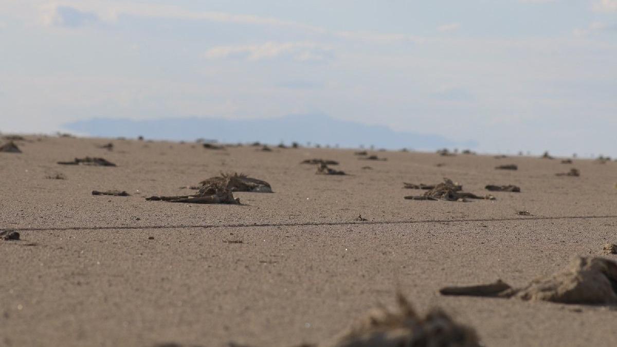 Valilik, Tuz Gölü'ndeki flamingo ölümleriyle ilgili soruşturma başlattı