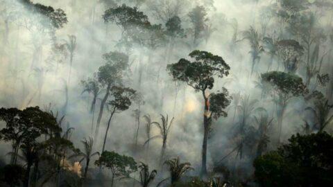 Amazon ormanları alarm veriyor: Saldığı karbondioksit 3 kat fazla