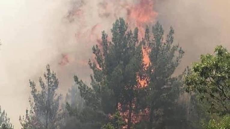 Mersin'deki orman yangını ikinci gününde de devam ediyor