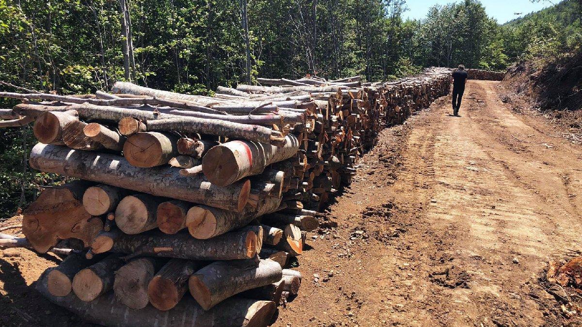 Korkunç iddia: Ağaçlar biyokütle santrali için kesiliyor