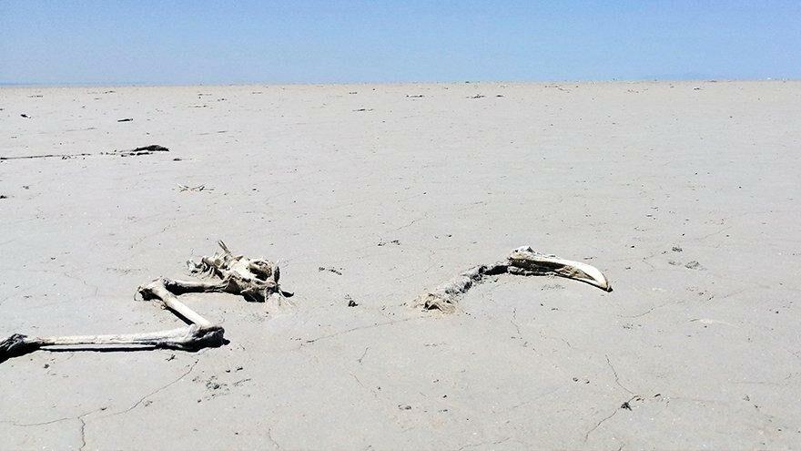 Tuz Gölü'nde yaşanan flamingo ölümlerinin ardından yeni uyarı