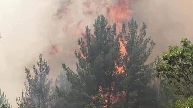 Yangınlar kontrol altına alındı: 4 kişi gözaltında