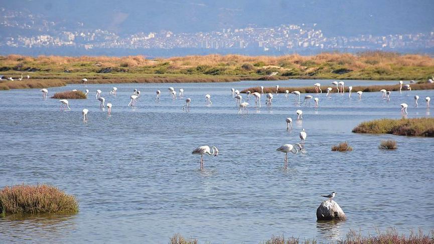 Gediz Deltasında aralarında flamingoların bulunduğu bazı kuş türleri ölü bulundu