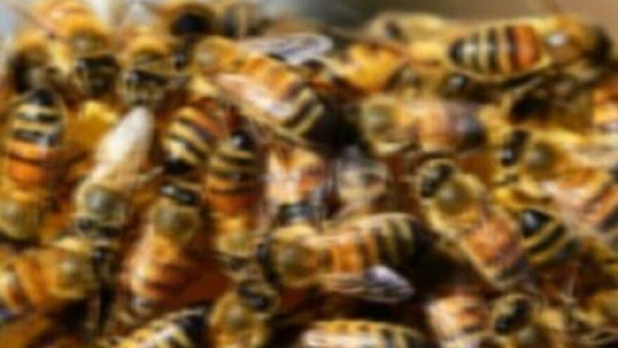 Yüzlerce arı saldırdı: 1 ölü, 4 yaralı