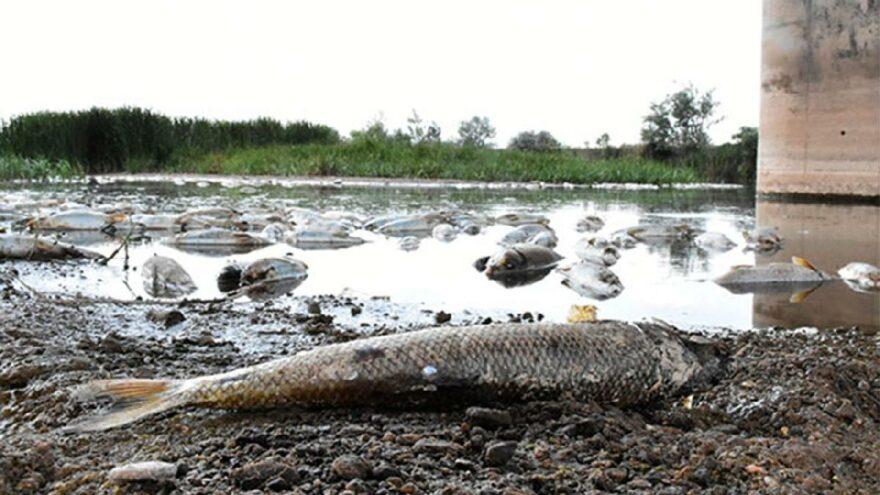 Türkiye'nin en uzun nehrindeki balık ölümlerinin nedeni belli oldu