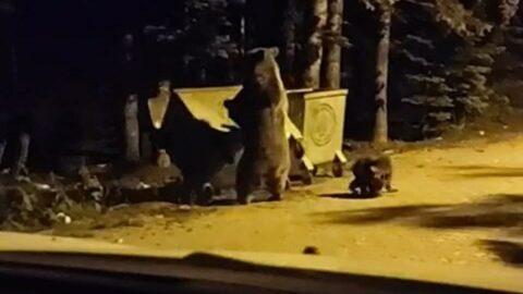 Uludağ'da turistin korku dolu anları! Ayıyla burun buruna geldi