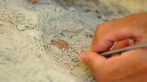 Heyecan yaratan keşif! M.Ö. 10 bin yılından kalma 'yiyecek' bulundu