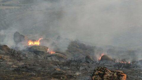 Avşa Adası'nda orman yangını