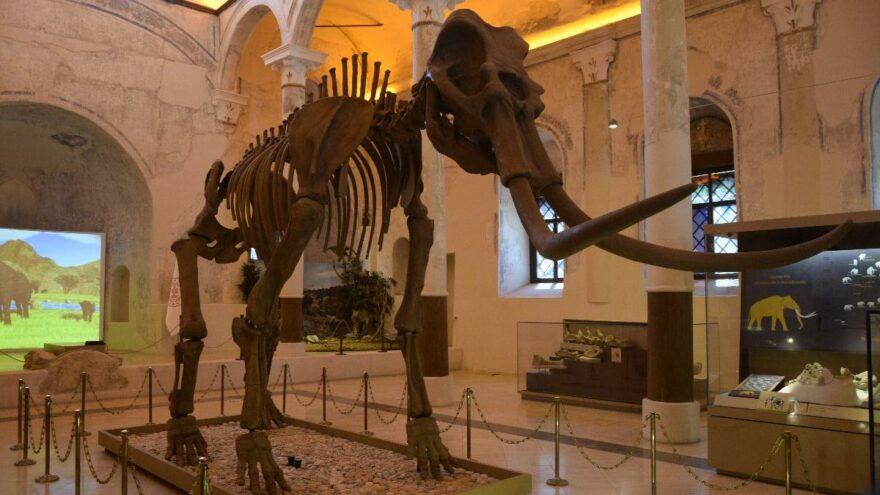 2 milyon yıllık Güney Fili fosilleri Doğa Tarih Müzesi'nde sergileniyor
