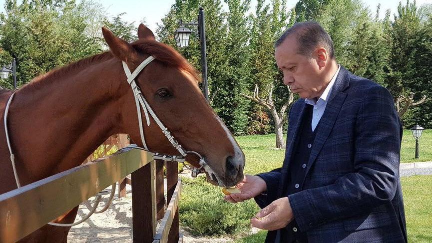 Cumhurbaşkanı Erdoğan 14 yıl sonra ata bindi