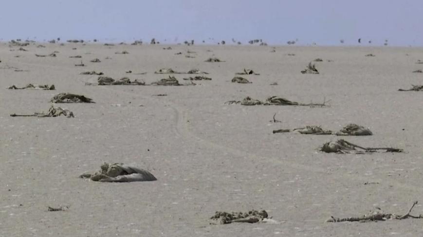Tuz Gölü'nde ölen flamingolar dünyayı derinden sarstı