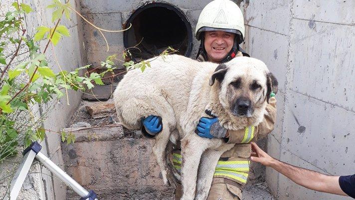İstanbul itfaiyesi, son 6 ayda 7 bin 821 hayvan kurtardı