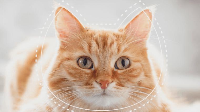 Kedilerin ruh hallerini anlamak için uygulama geliştirdiler
