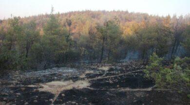 Orman yangını çıkarmak için gelen 2 terörist yakalandı iddiası