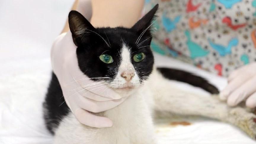 Kedinin cinsel saldırıya uğradığı belirlendi
