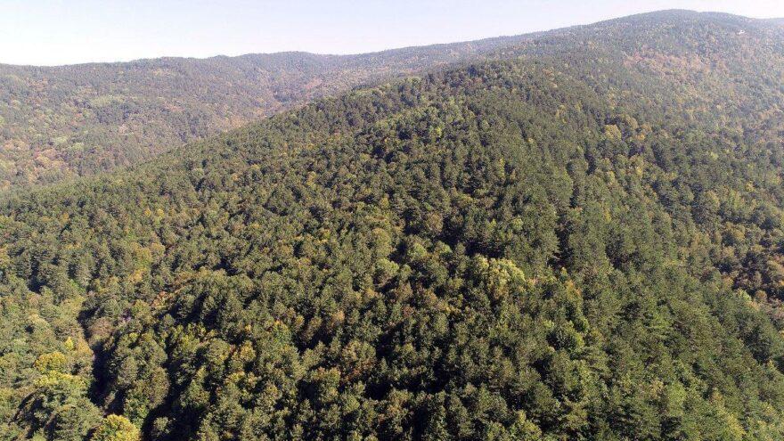 Çanakkale'de ormanlara giriş 1 ay yasak