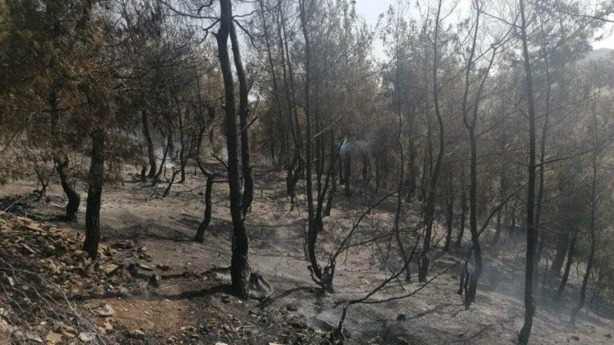 Kula'da orman yangını korkuttu