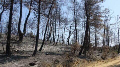 Ormanlara girişler 1 ay süreyle yasaklandı