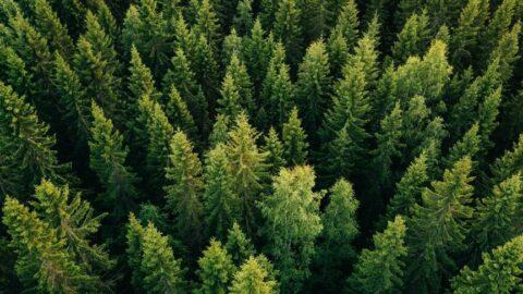 Antalya'da ormana girişler yasaklandı