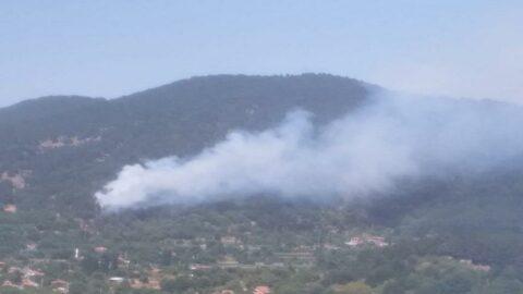 Tarım ve Orman Bakanlığı açıkladı: 85 yangından 74'ü kontrol altında