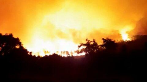 Milas yangını Bodrum'a ulaştı: Bir köy boşaltıldı