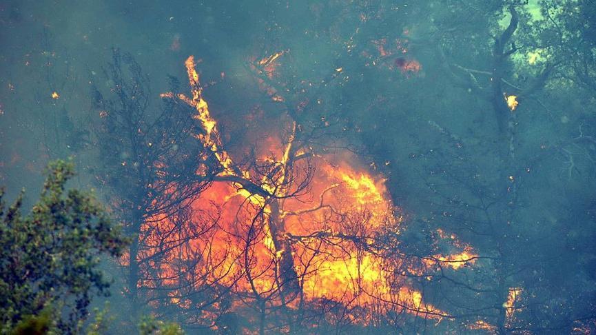 Yanan ormanlar nasıl yeniden ağaçlanacak? Prof. Dr. Tolunay tek tek açıkladı