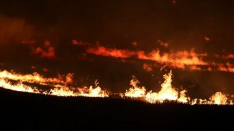 Anız yangını kontrolden çıktı, tarlalar kül oldu