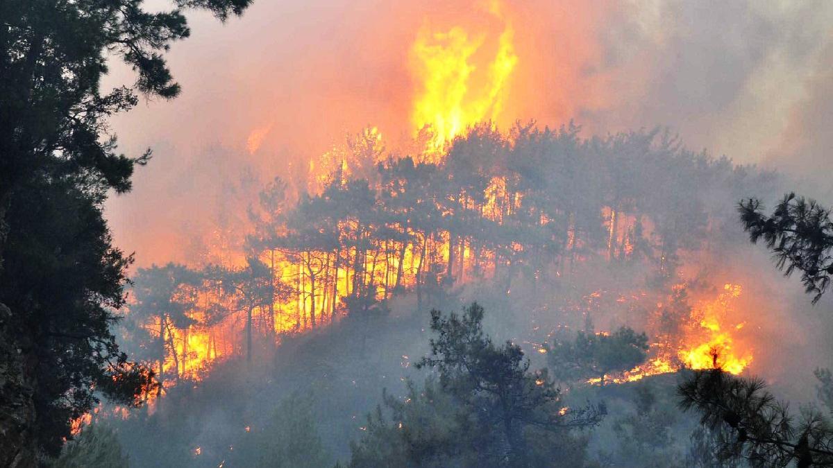 Milas'taki Beyciler köyü sabaha kadar yandı, köylüler kabusu yaşadı