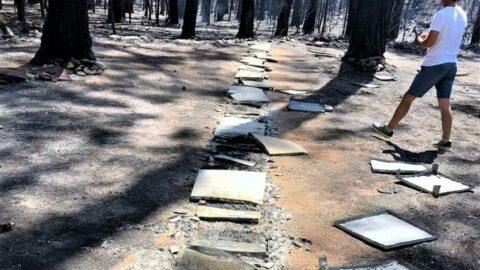 Orman yandı, çam balında tehlike büyüdü
