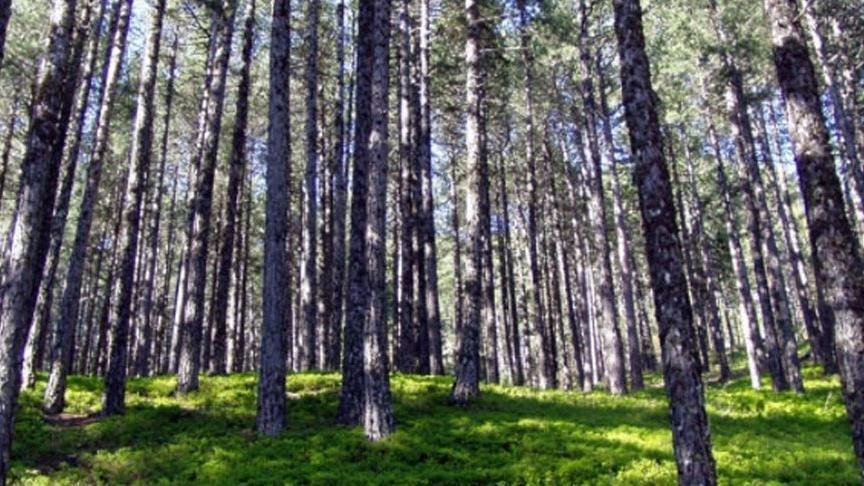 Elazığ'da ormanlara girişler yasaklandı