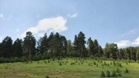 Erzurum'da ormanlara giriş yasaklandı