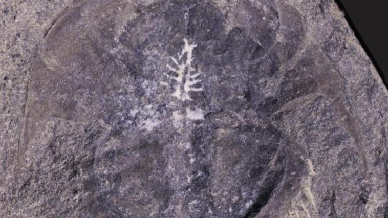 Bilim dünyasını heyecanlandıran keşif: 310 milyon yıllık beyin bulundu