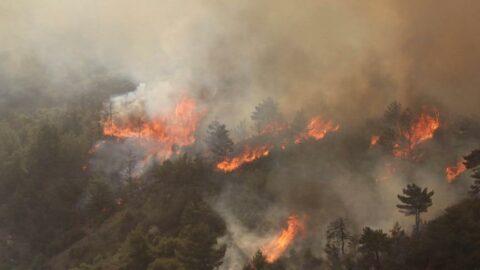 Sosyal medyada yer alan orman yangınları yalanları