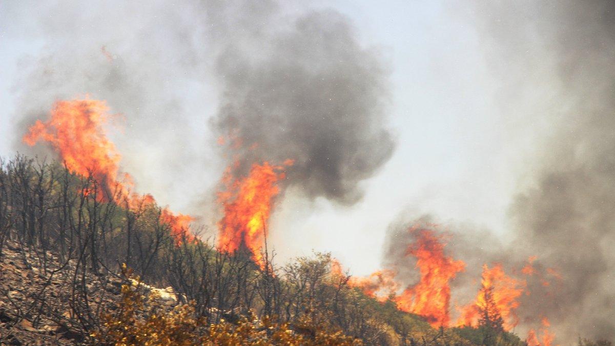 Orman yangınlarında son durum