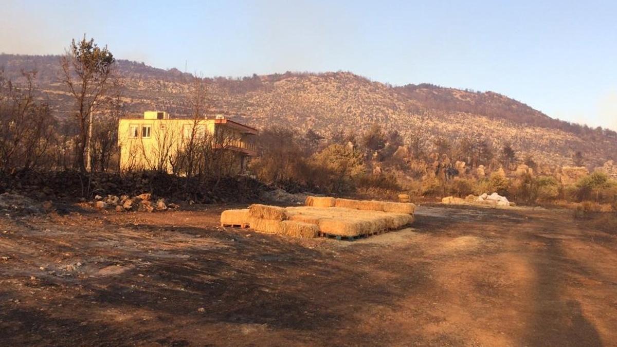 Orman-İş'ten çarpıcı Manavgat raporu: Daha sık ve şiddetli yangınlar olacak
