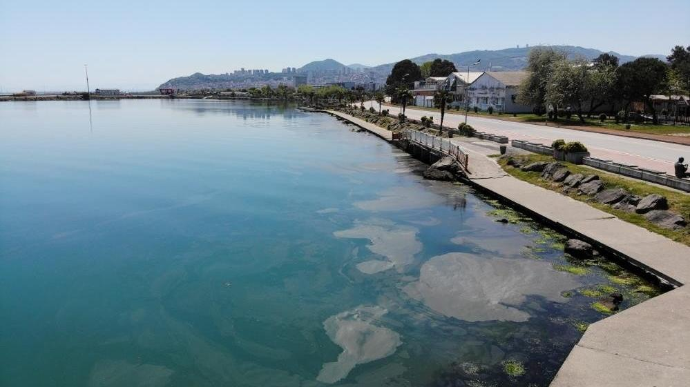 Karadeniz'de müsilaj tehlikesi
