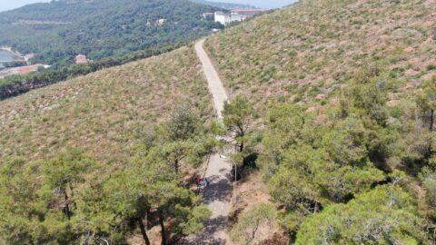 Heybeliada'da büyük orman yangınından 1 yıl sonra değişim