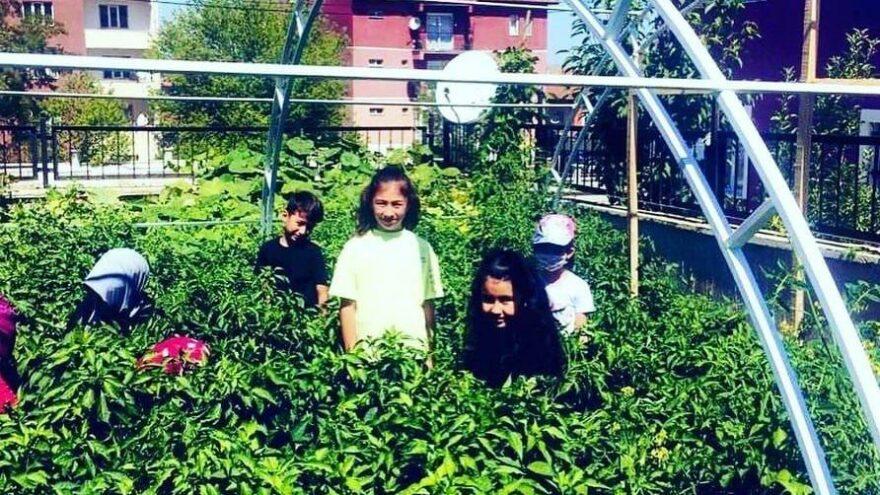 İlkokul bahçesinde hasat heyecanı
