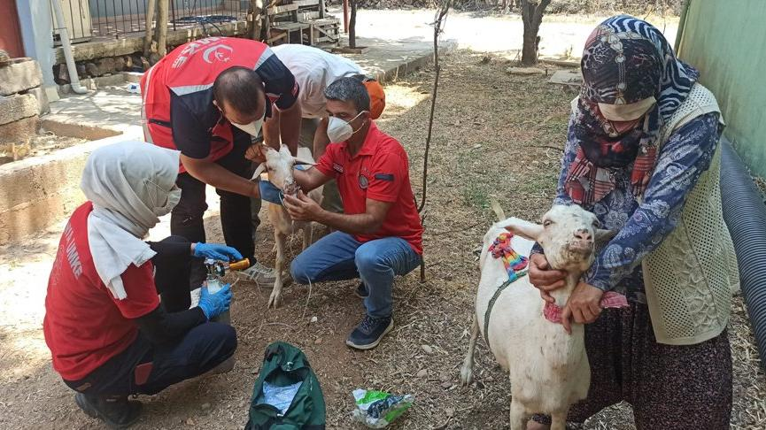 Yangından etkilenen hayvanlar tedavi altına alındı
