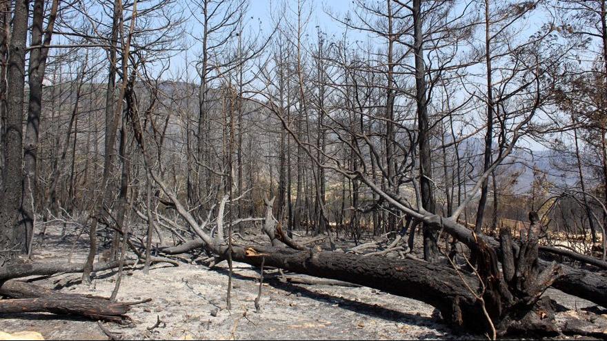 Yangınların faturası 300 milyarı aşacak