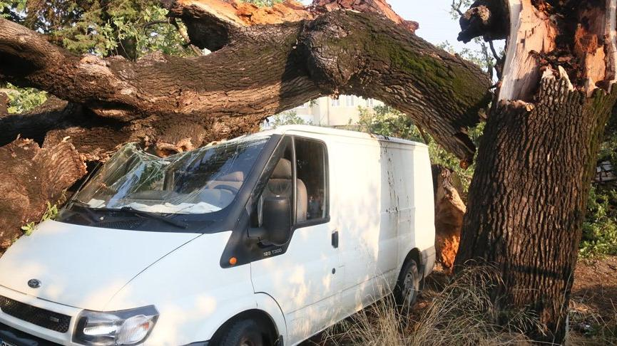 300 yıllık meşe ağacı fırtınada aracın üzerine devrildi