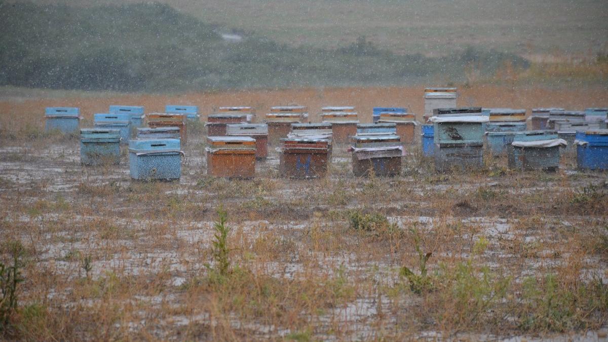 Yağmur sel oldu, arıları vurdu